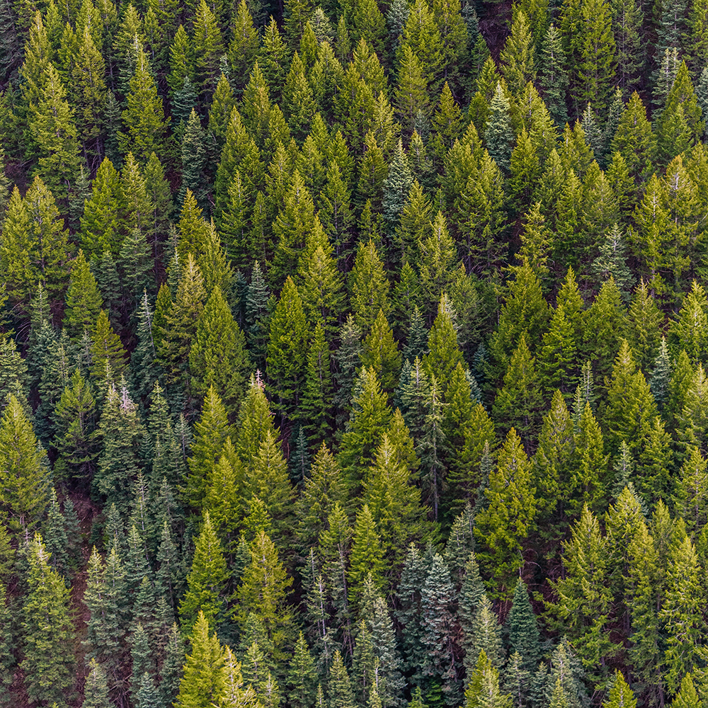 Putting America's Forests to Work on Climate Change