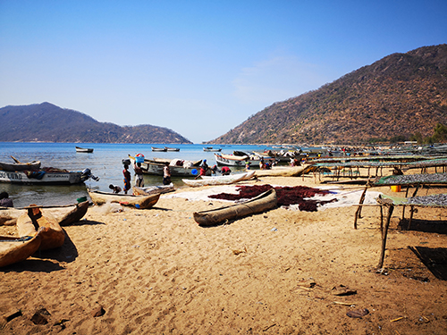 Global Study on Small-Scale Fisheries to Provide Vital Knowledge, Recognizes U.N. Food Report