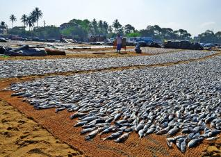 Fish Drying, Photo by Shutterstock.com