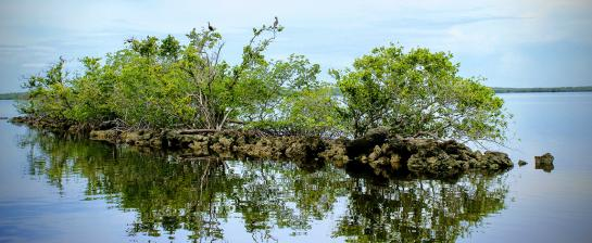 Mangrove island on Florida's Gulf Coast in Everglades National Park